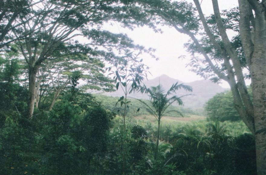 12 Vue forêt tropical